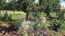 Ihringen Garten