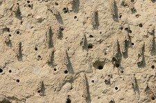 14 Löss Odynerus Nester